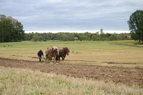 2007-09-15_14_valsta