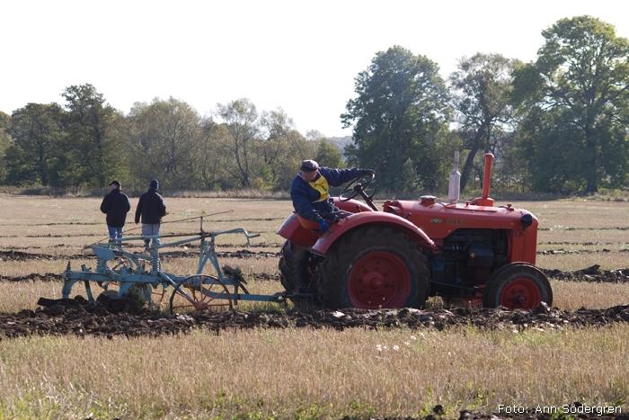 2009-10-10_136_DM_plojning