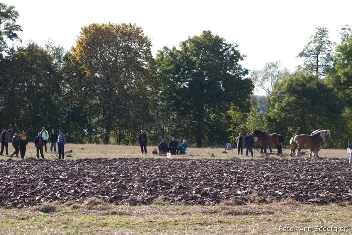 2009-10-10_181_DM_plojning